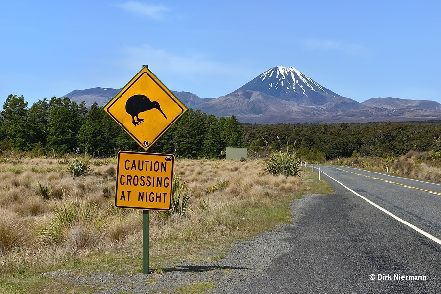 Mount Ngauruhoe and Kiwi