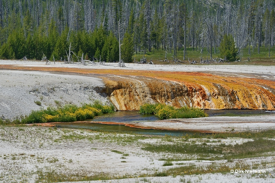 Cucumber Spring Yellowstone