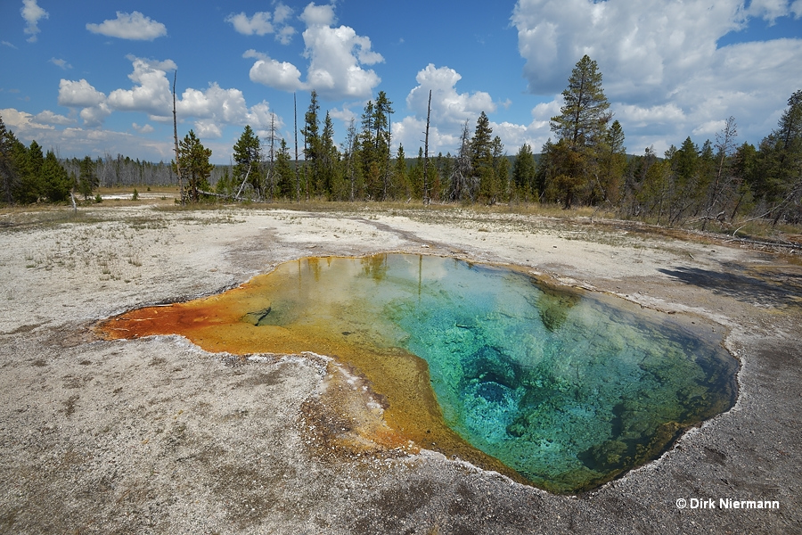 Lemon Spring Yellowstone