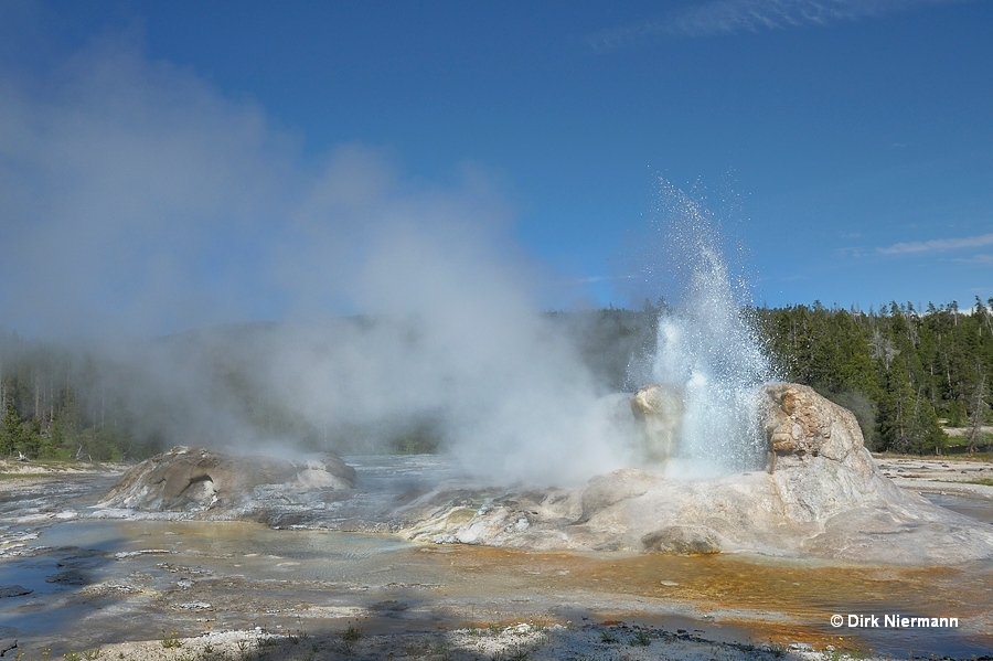 Grotto Geyser Yellowstone