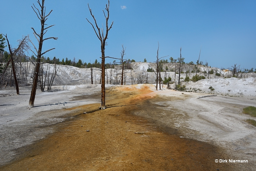 Angel Terrace Mammoth Hot Springs Yellowstone