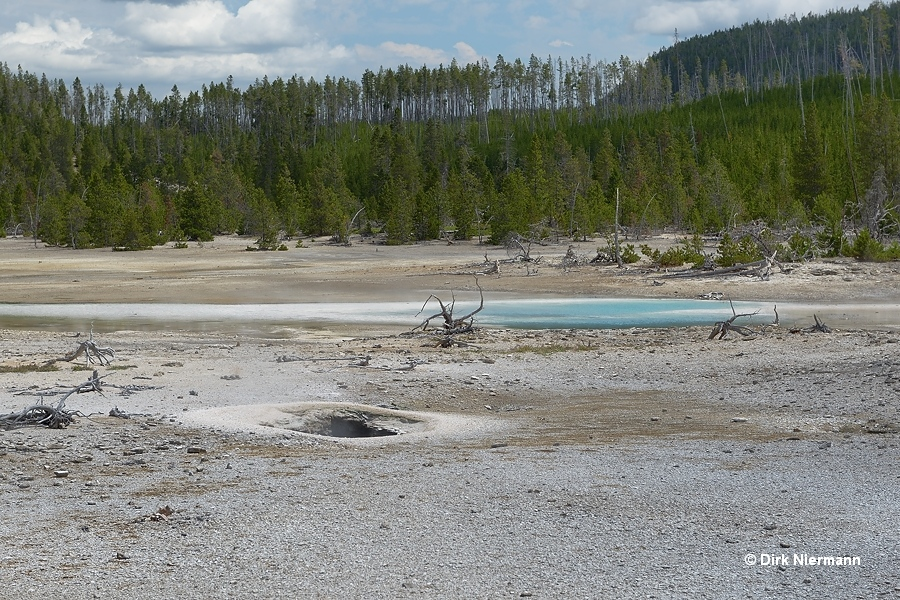 Area east of Pearl Geyser Yellowstone