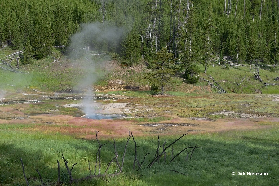 Clearwater Springs Yellowstone