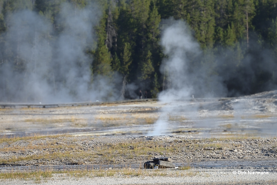 Teapot Geyser Yellowstone