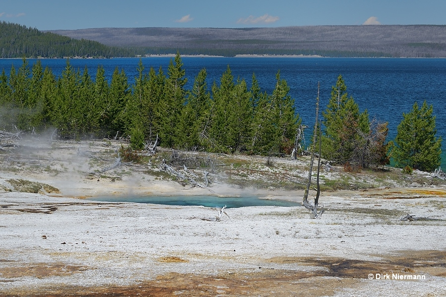 King Geyser West Thumb Basin Yellowstone